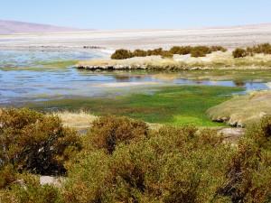 Chili-Bolivie 14-0560
